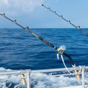 Things to Understand About A Fishing Charter